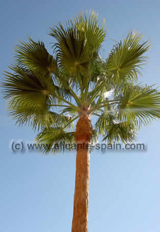Palm Tree Surfboard at